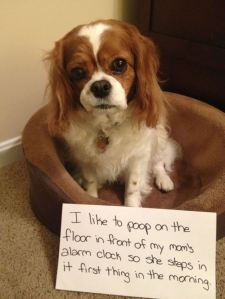 dog shaming best