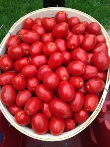tomato bushel